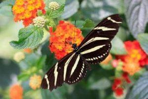 128953_Destination_Roatan_Butterfly Garden_B_Roatan_Butterfly_iStock_000009822259XSmall